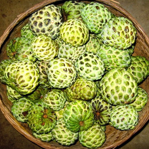 Custard Apple - Sitafal